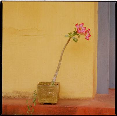 Flower, India